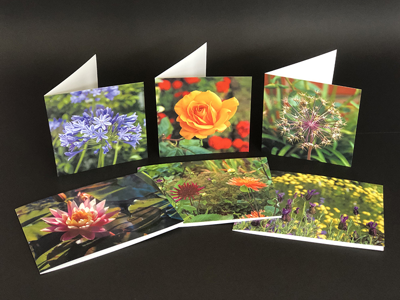 Photograph of a collection of greeting cards of flowers